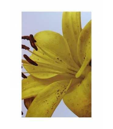 Imagen de Flor Lily en Azulejo Blanco 20x30cm Alcesa - Ecart